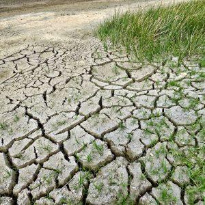Ganemos Jerez solicita recuperar y actualizar el Plan Especial de Sequía del Distrito Hidrográfico Guadalete-Barbate