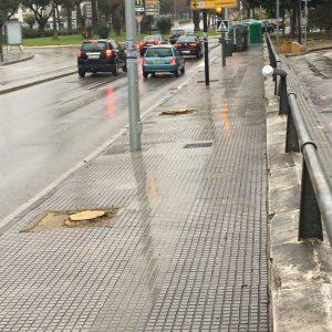 Ganemos Jerez exige al gobierno explicaciones por la tala indiscriminada de árboles en diversos puntos de la ciudad